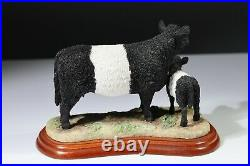 Border Fine Arts Cattle breeds Galloway Cow and Calf (belted) 2003 A2693