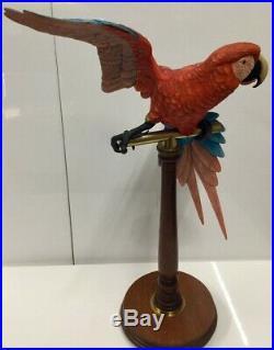 Border Fine Arts L76 Macaw