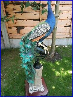 Border Fine Arts Ltd Edition Regal splendor pheasant Very large and Rare