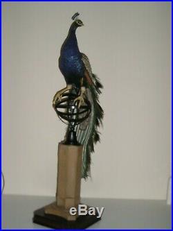 Border Fine Arts REGAL SPLENDOUR Millennium Peacock