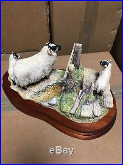 New Border Fine Arts Wrong side of the Fence sheep limited ed. JH100
